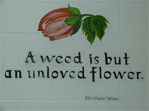 A weed is but an unloved flower